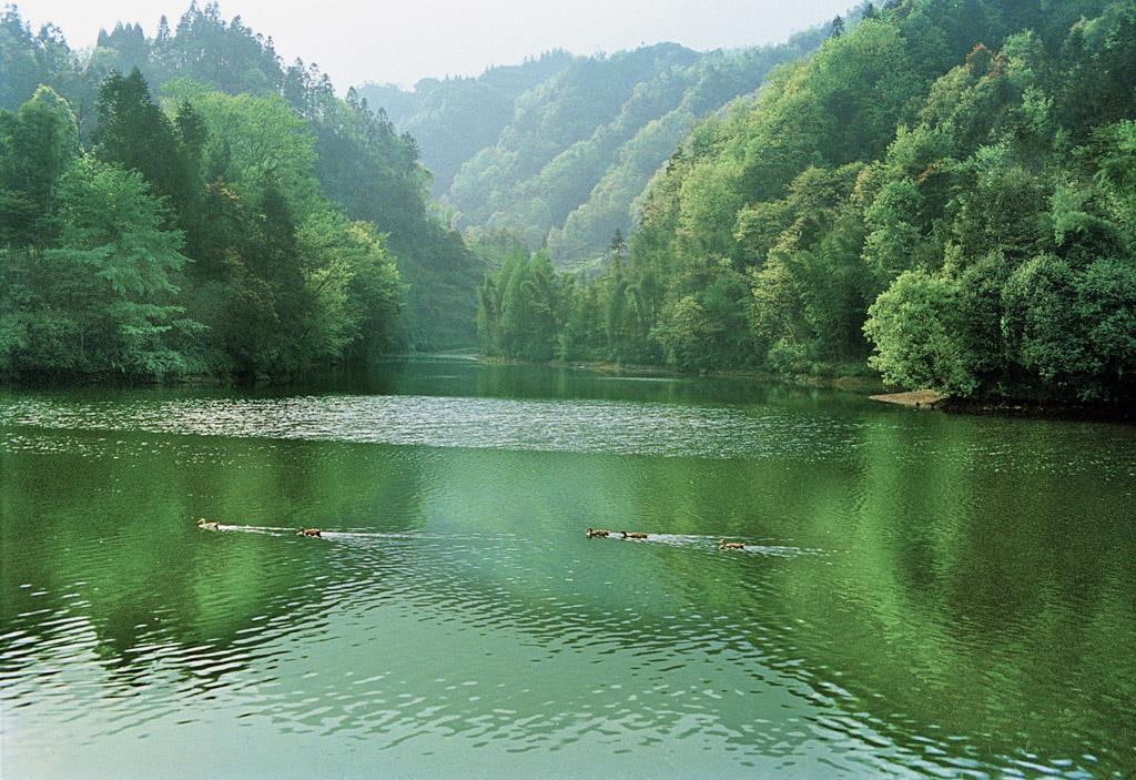 雅安碧峰峡风景区